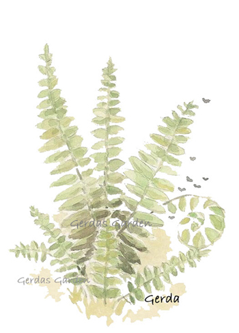 """Fern"" botanical watercolor"
