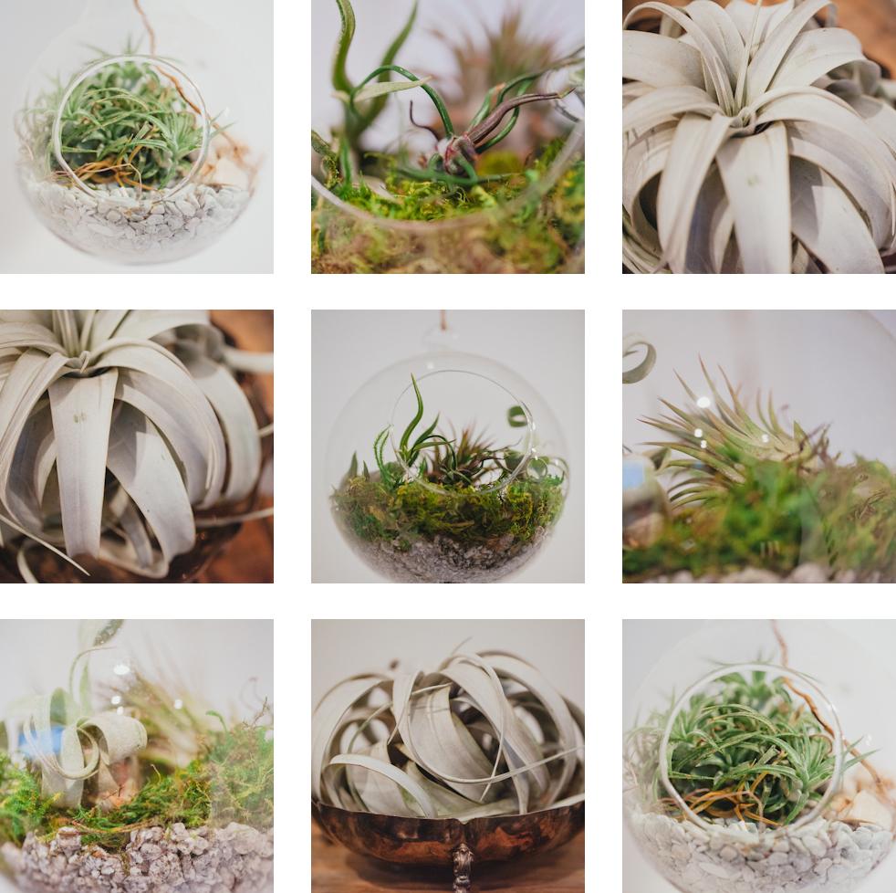 air_plant_love.jpg