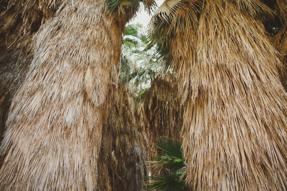 palm_springs_photographers_sczebel-11.jpg