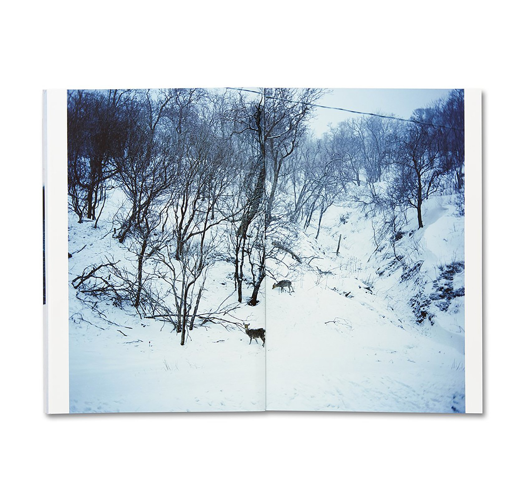 trails06.jpg