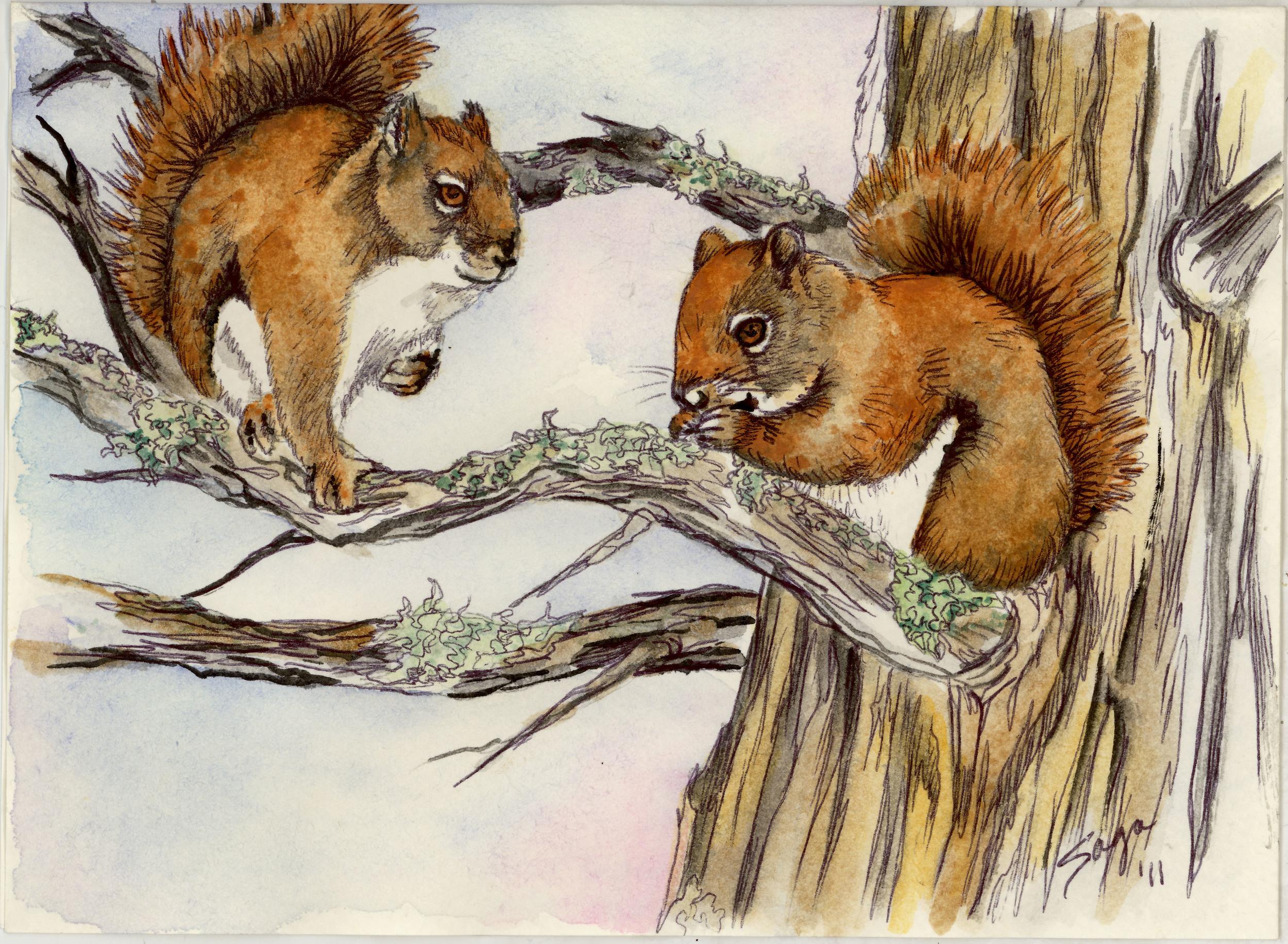 Sara's Squirrels.jpg