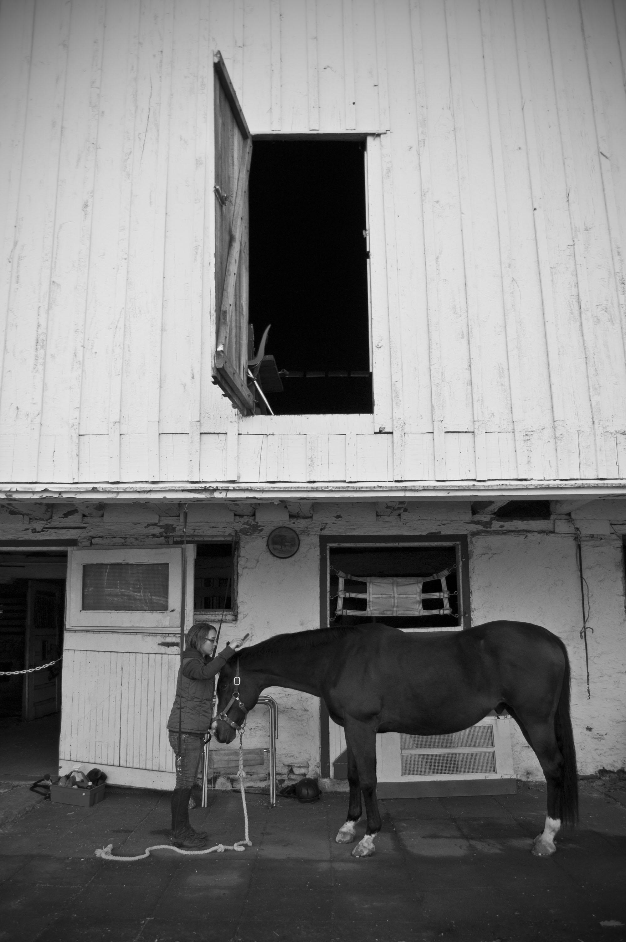 girl_brushing_horse_bw.jpg