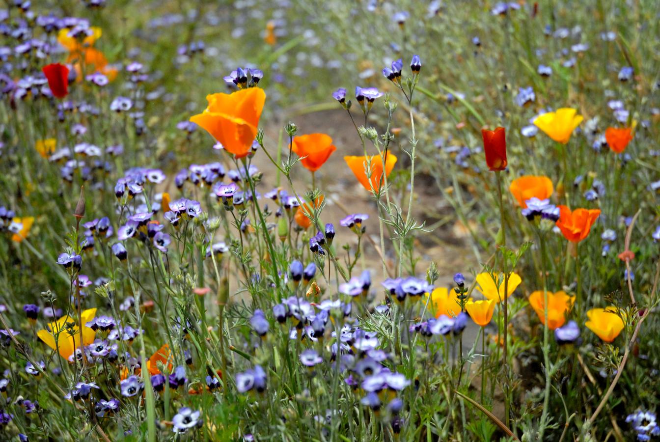 Katzwildflowers.jpg