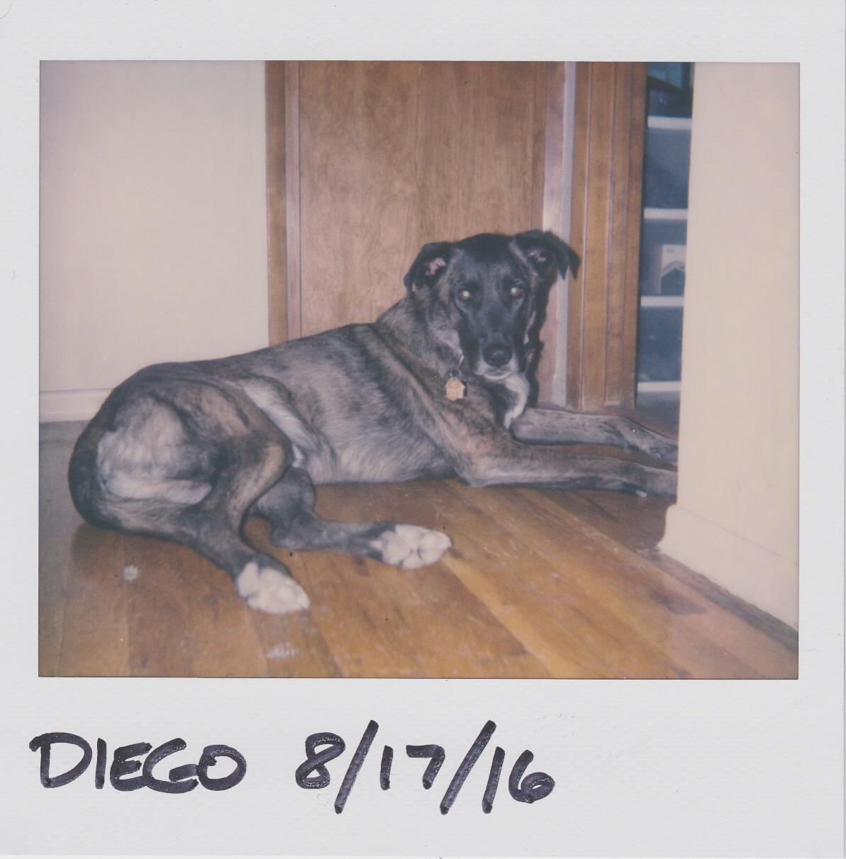Diego | Polaroid Spectra 2 | Impossible Project Film | Daniel Hedrick