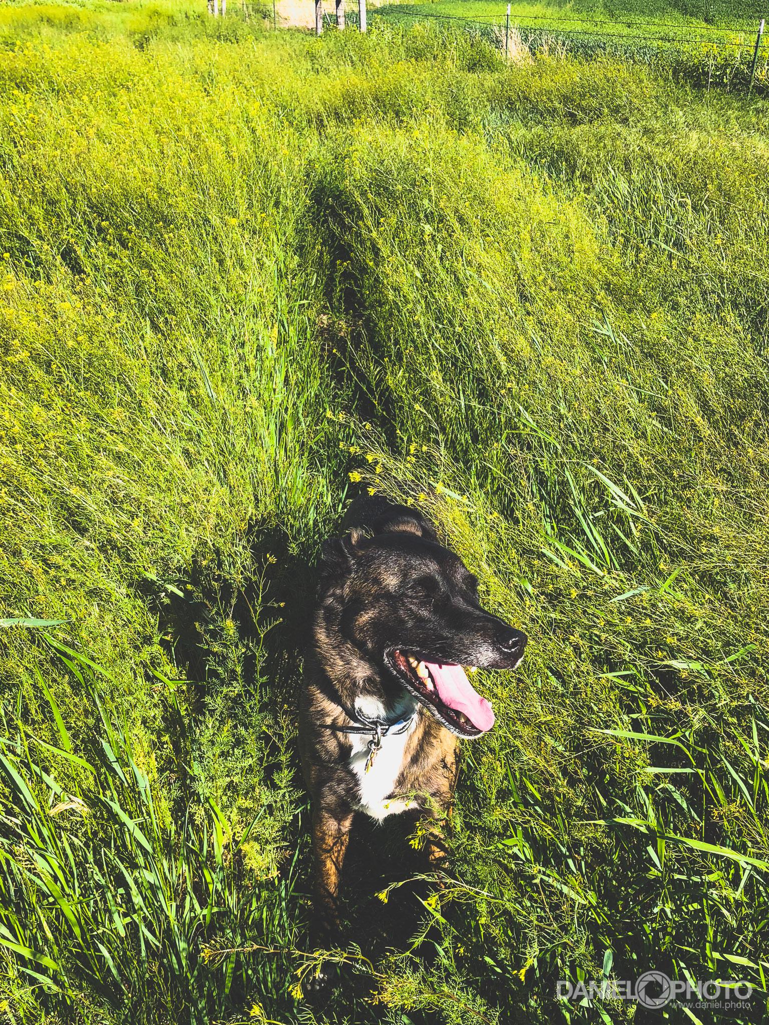 daniel-hedrick-dog-walk-2384.jpg