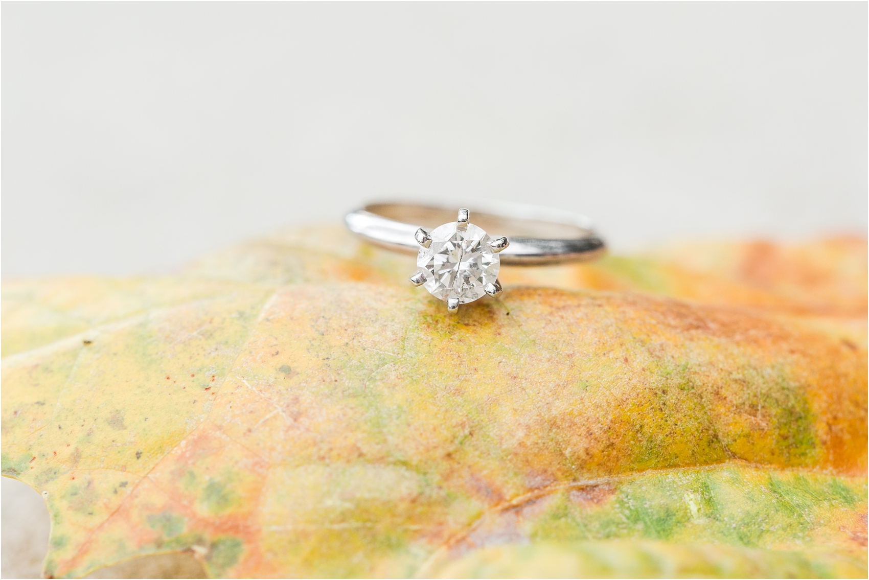 classic-fall-engagement-photos-at-the-university-of-michigan-in-ann-arbor-mi-by-courtney-carolyn-photography_0015.jpg