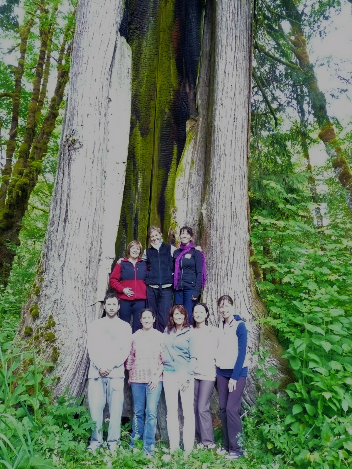 Standing in the Cedar Tree
