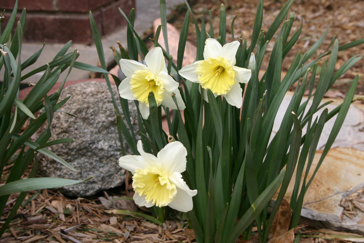spring moles (3).JPG