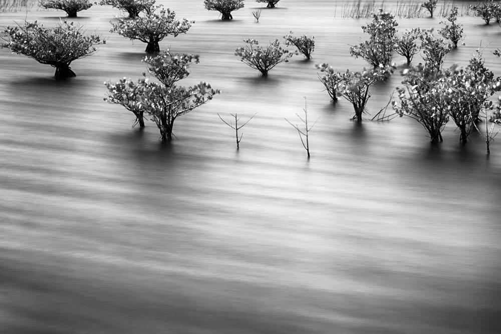 Boggy Pond