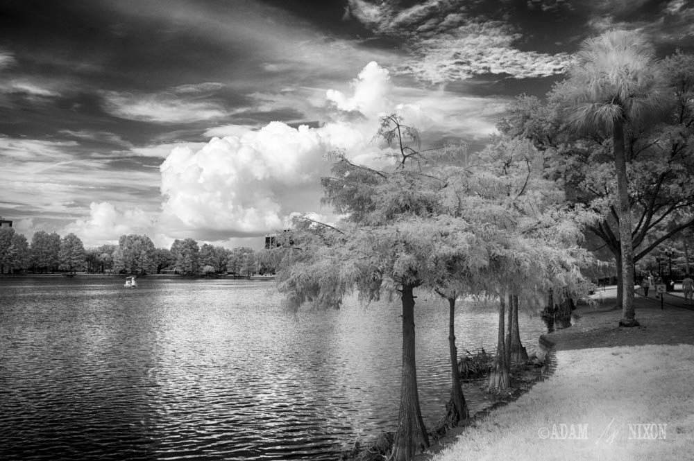 Lake Eola #2