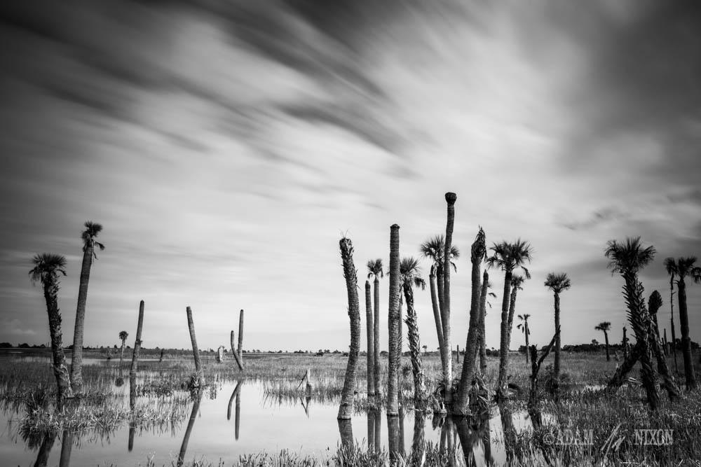 Viera Wetlands #3
