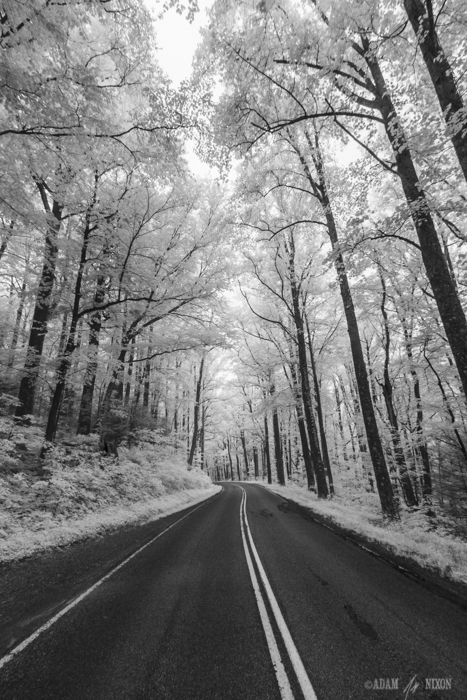 Tree Lined Mountain Road