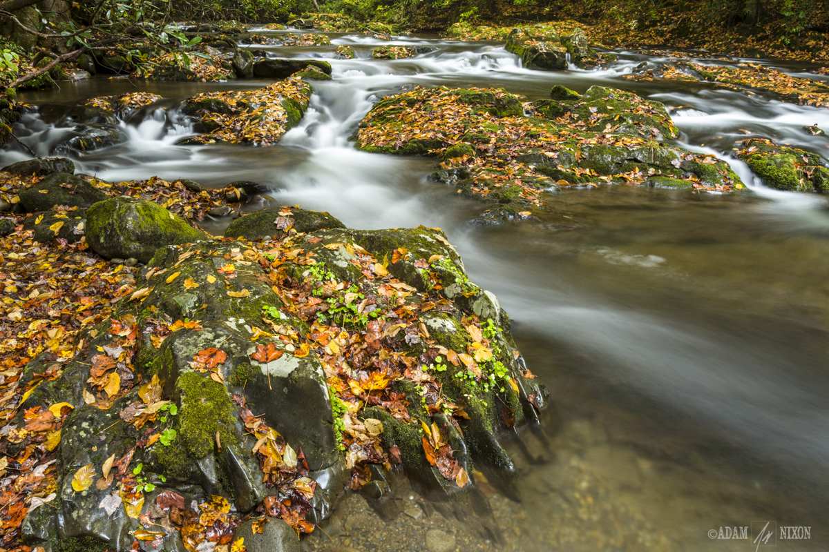 Autumn Leaves in the River