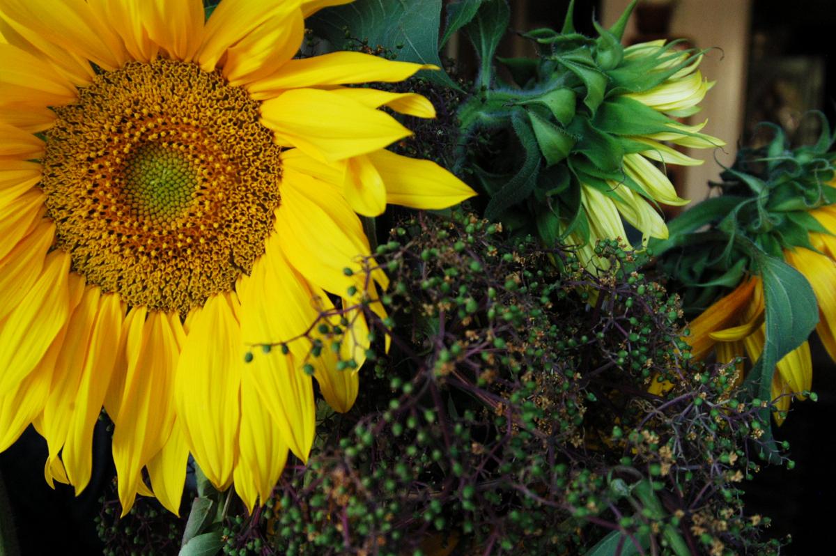elderberries and sunnies 2.jpg