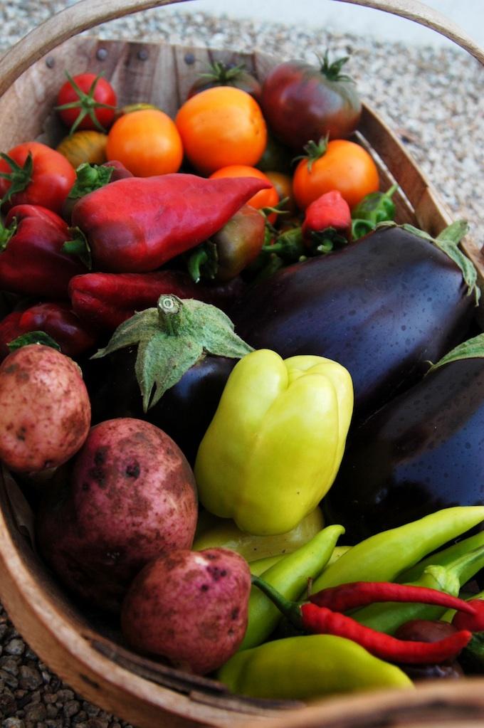 harvest 8.jpg