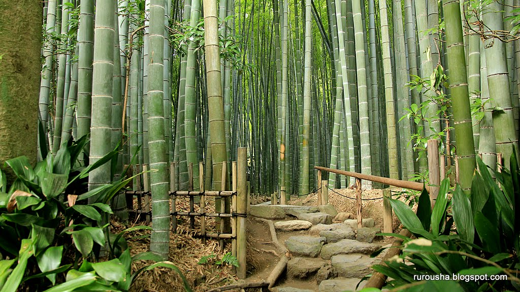 Bamboogrove