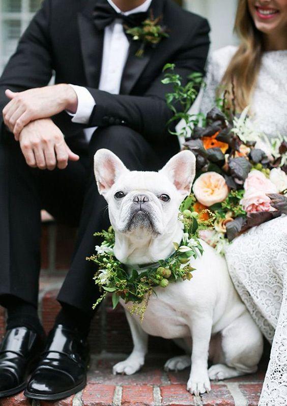 dogs in wedding blog 3.jpg