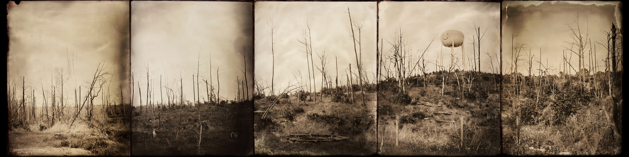 Wildfire ravaged landscape, Bastrop, TX. Image comprised of 4x5 tintypes.