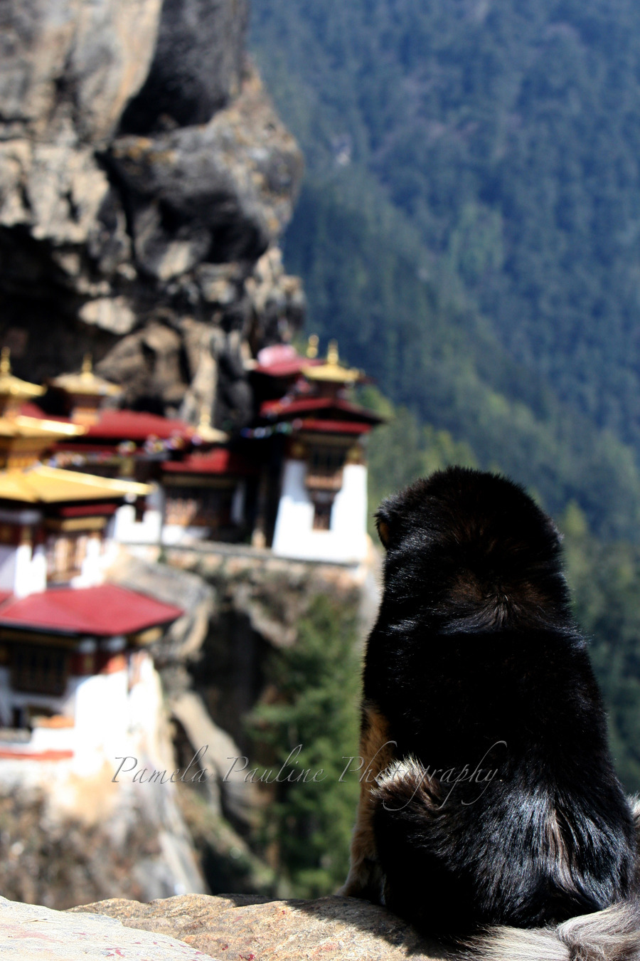 A Dog's View of the Tiger's Nest