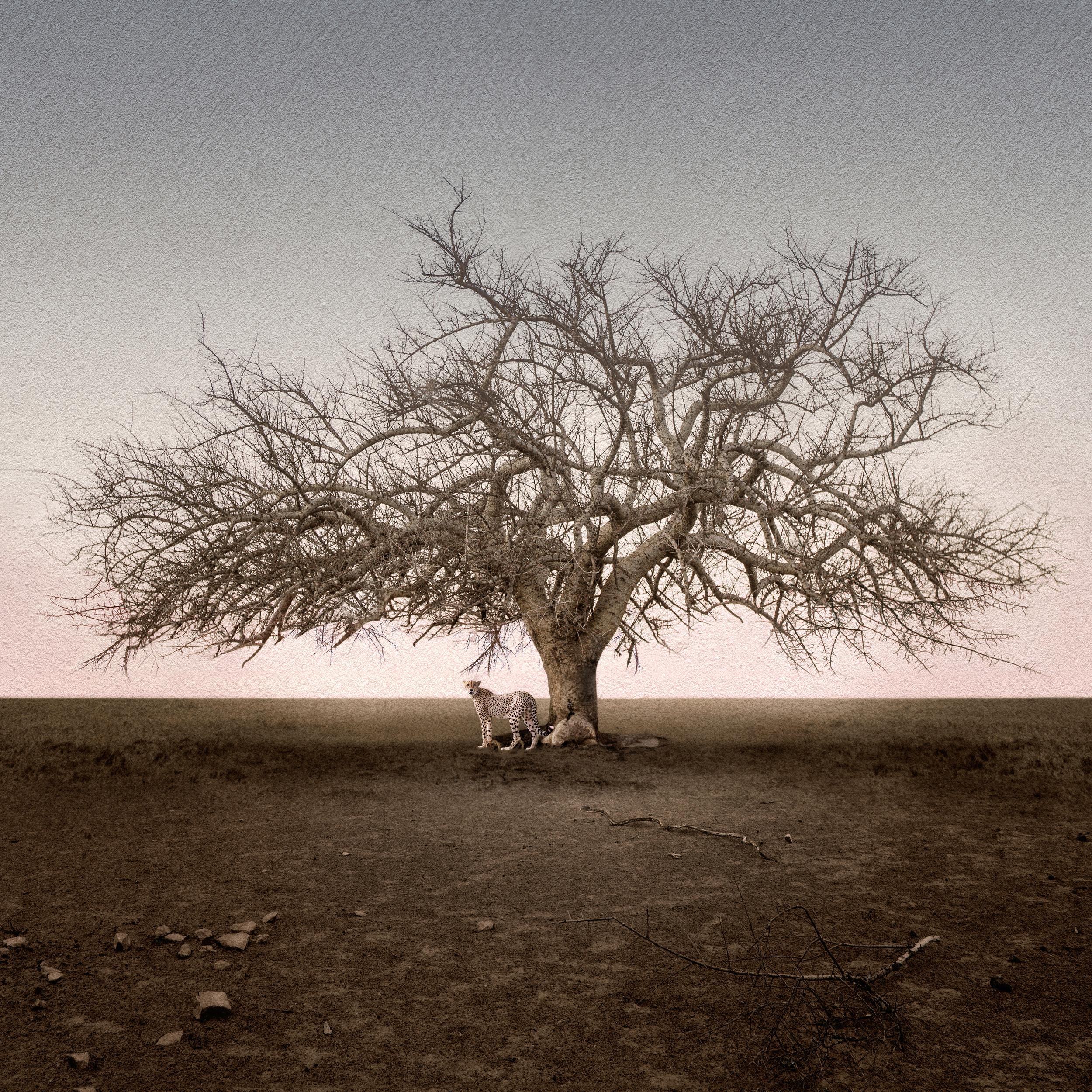 Cheetah and Lone Tree