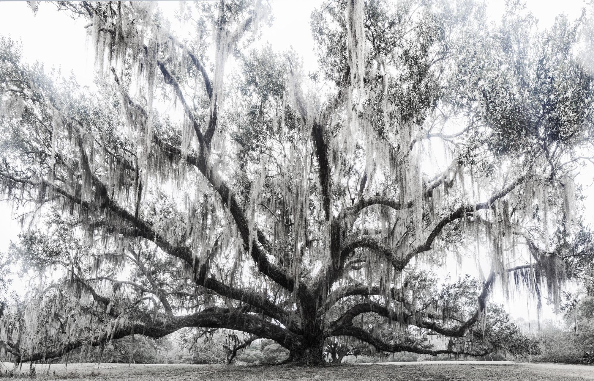 The Oak on Approach