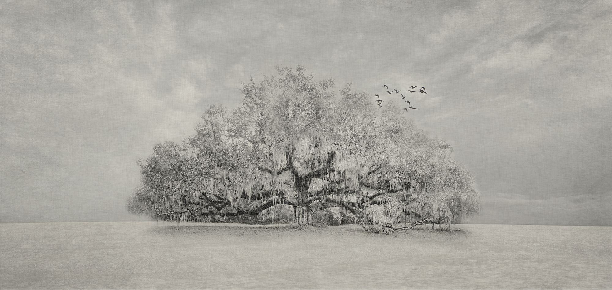 New 1 - Live Oak and Birds