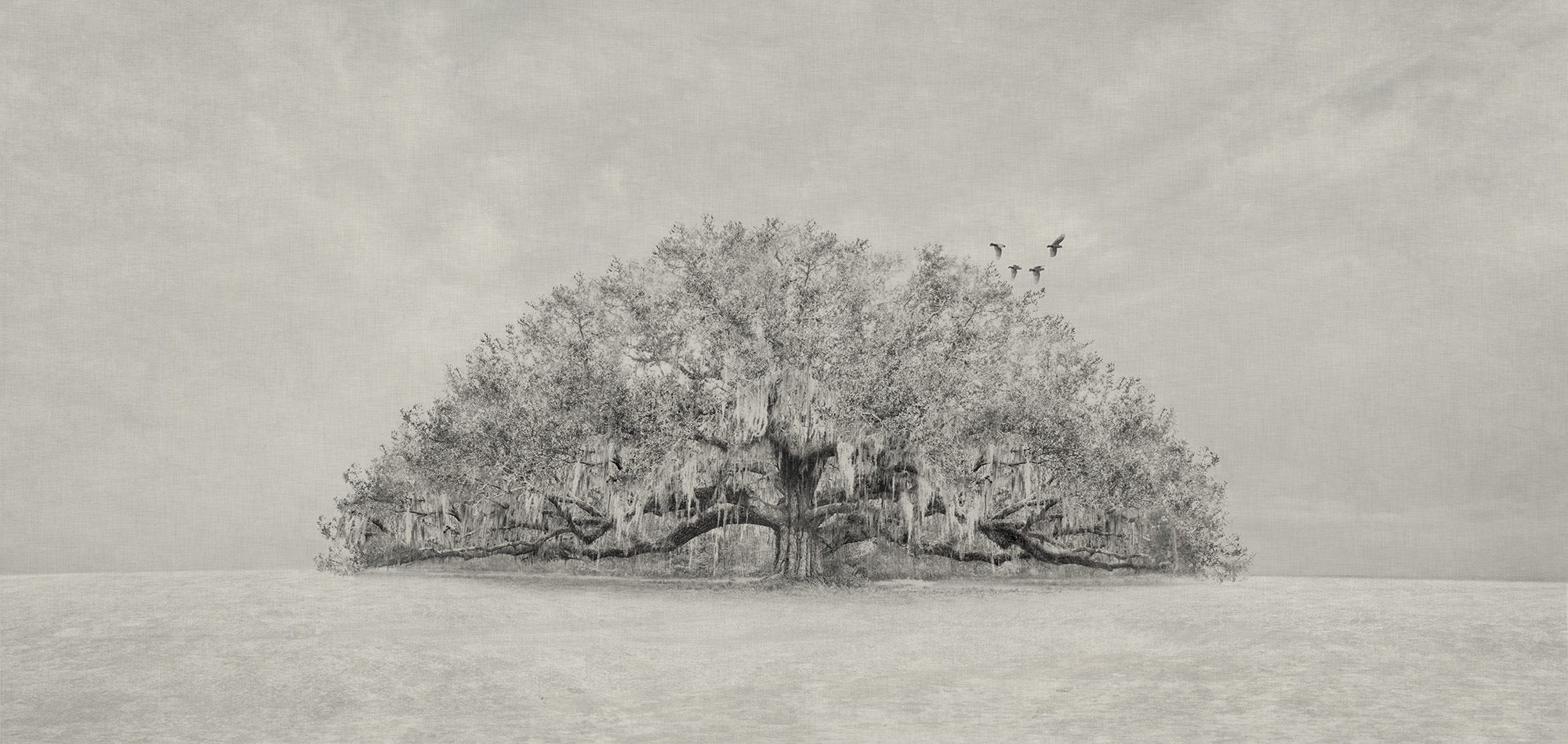 New 14 - Lonely Tree and Birds