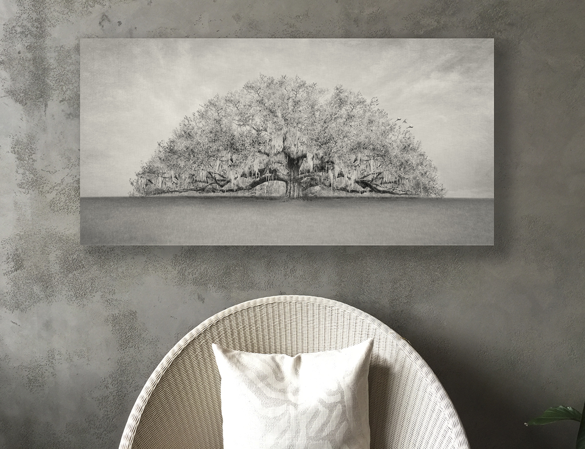 The Southern Live Oak Tree