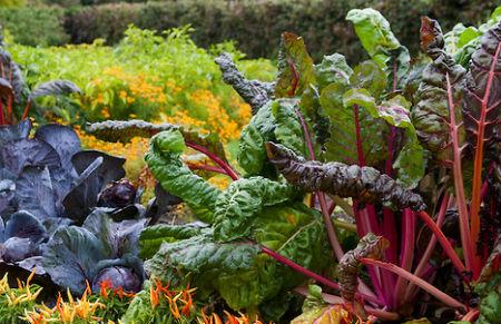 love veggies.jpg