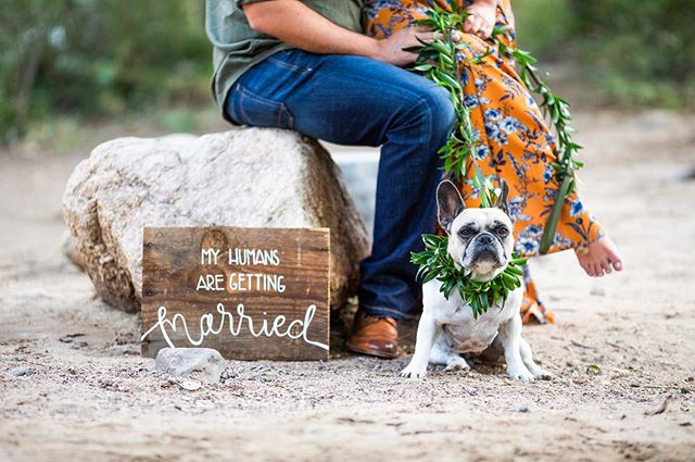 Congrats Lucy! Your humans are getting married today!! Kelly & Wes I can't wait to be a part of your day today! See you soon 🤗♥️🏔. . . . #coloradowedding #coloradoweddingphotographer #dogsofinstagram #gettingmarried #weddingphotographer #myhumansaregettingmarried #frenchie #frenchiesofinstagram #engagementphotos #coloradoengagementphotographer