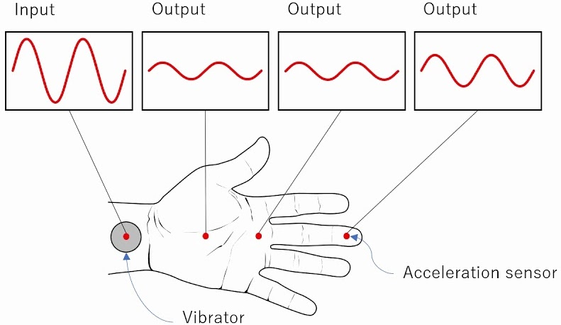 Wave Transmission from Wrists to Hands