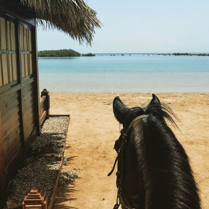 Lovely way to start the day in the Nabq National Park in Egypt. Thanks to my new friends at  Sharm Equestrian  holiday riding specialists in Sharm El Sheikh and Dahab. Also, thanks to my friend  Equigeo  for tipping me off to this photo and account. I always appreciate leads to beautiful photos.