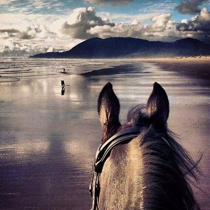 Beautiful day for a beach ride along the Oregon coast. Thanks to @terrakar aboard her Friesian/Holsteiner mare, Dasha. .............. Tag your photo #lifebetweentheears for a chance to be featured. Ride On! ^^ .............. #betweentheears #nehalembay #statepark #oregoncoast #thankyou #terra