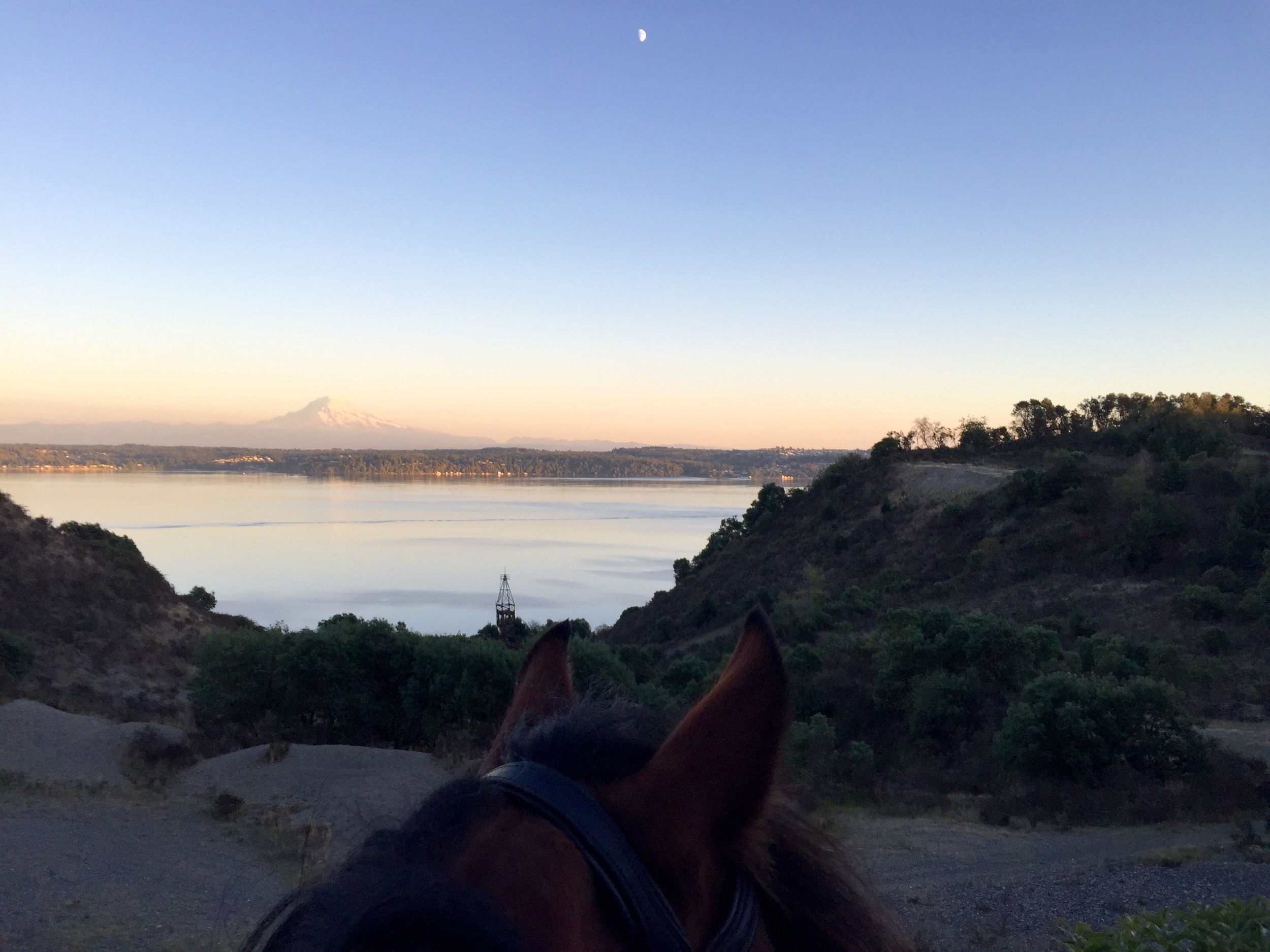 MAURY ISLAND, WASHINGTON Perfect first day of autumn and perfect evening for a hack with my dogs., by Yours Truly.  ......... Tag your photo #lifebetweentheears for a chance to be featured. Ride On! ^^ .......... #betweentheears #vashon #mauryisland #firstdayoffall #equinephotography  #eqinox #mtrainier