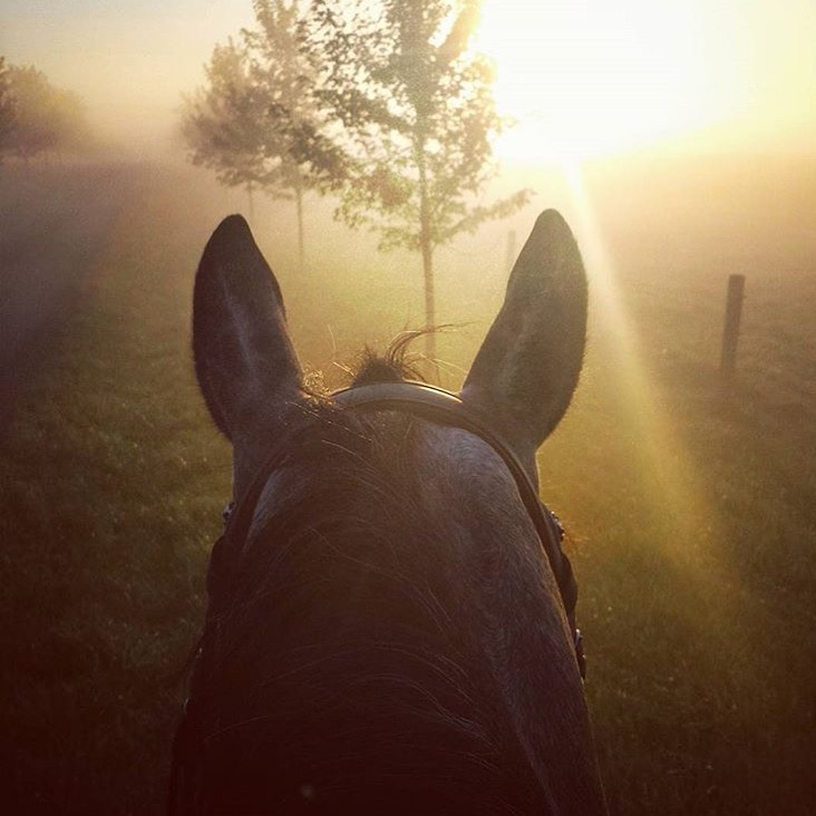 Thank you @katerzjoy for sharing not only this lovely photo but also the perfect quote to go along with:  Derive happiness in oneself from a good day's work, from illuminating the fog that surrounds us. - Henri Matisse ........ Tag your photo #lifebetweentheears For a chance to be featured. Ride On! ^^ ......... #betweentheears #fog #equinephotography #equestriantravel #ohcanada #matisse #horsesofinstagram #thankyou #kate