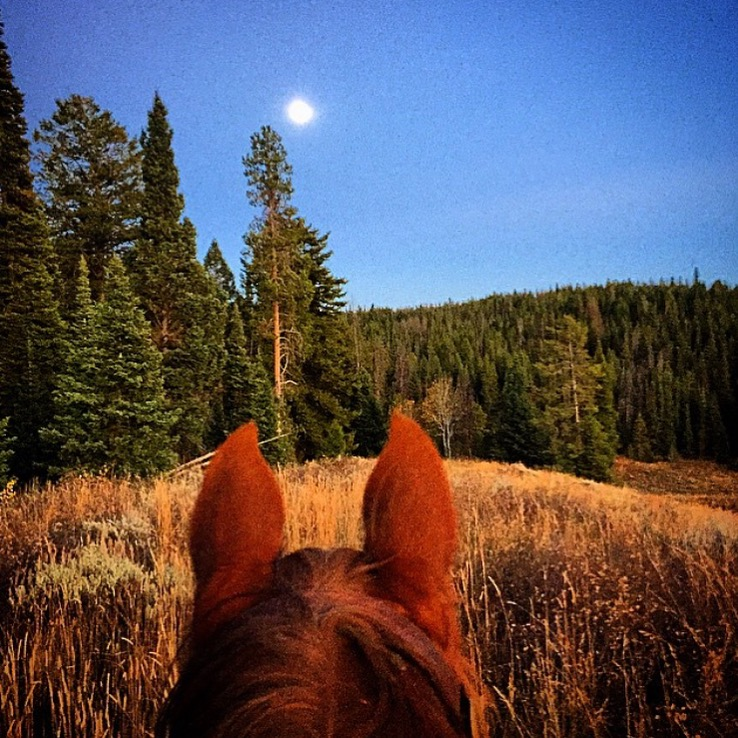 Moonlight in the hills of Wyoming. Perfect for eclipse watching. Thank you 🔷 @sleepingindianoutfitters 🔷 for the great shot! ..........Tag your photo #lifebetweentheears for a chance to be featured. Ride On! ^^ #betweentheears #equestriantravel #equinephotography #equineadventures #wyoming #moonlight #thankyou #sleepingindianoutfitters