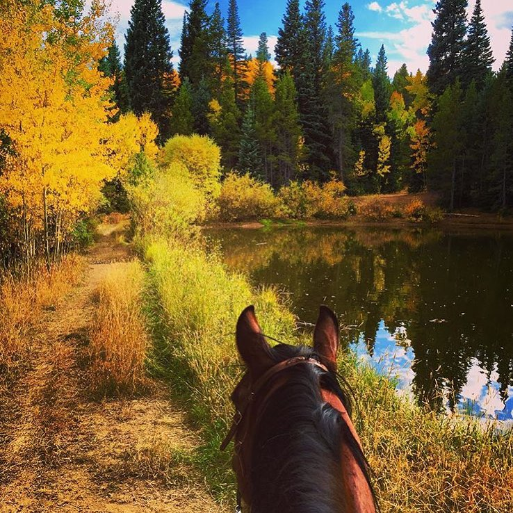 Quintessential autumn in Colorado, thanks to @mountedshooter32 .   .........   Tag your photo   #lifebetweentheears  for a chance to be featured. Ride On! ^^   ........   #betweentheears    #equinephotography  #equestriantravel    #fallcolor    #colorado    #thankyou  #crystal