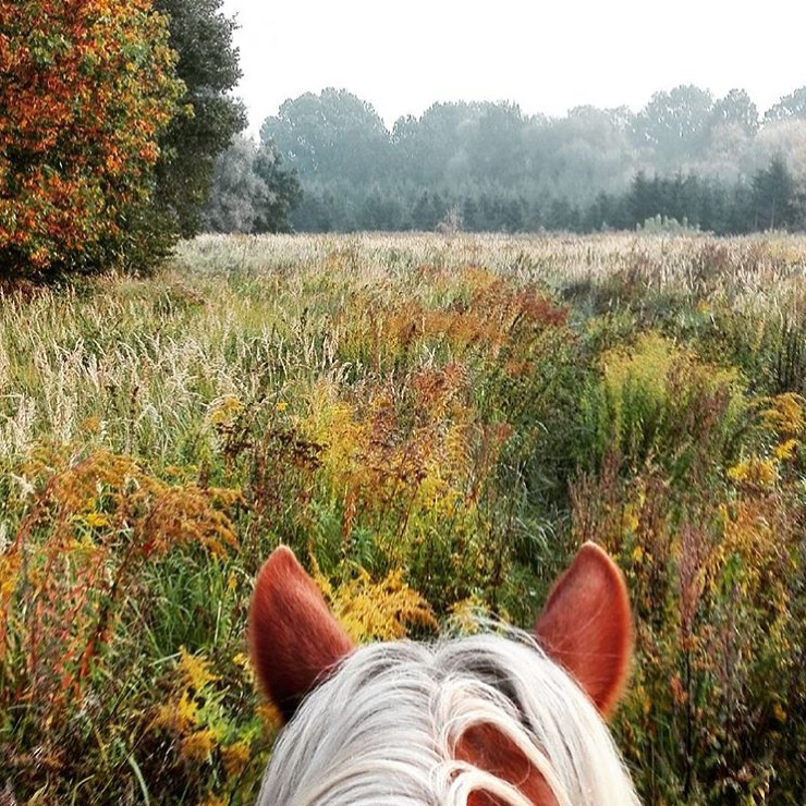 When your horse matches the season. Thank you 🔷 @lieleenchen 🔷! .......... Tag your photo #lifebetweentheears for a chance to be featured.Ride On! ^^ .......... #betweentheears #autumn #fallcolor #equestriantravel #equestrianphotography #berlin #germany #thankyou