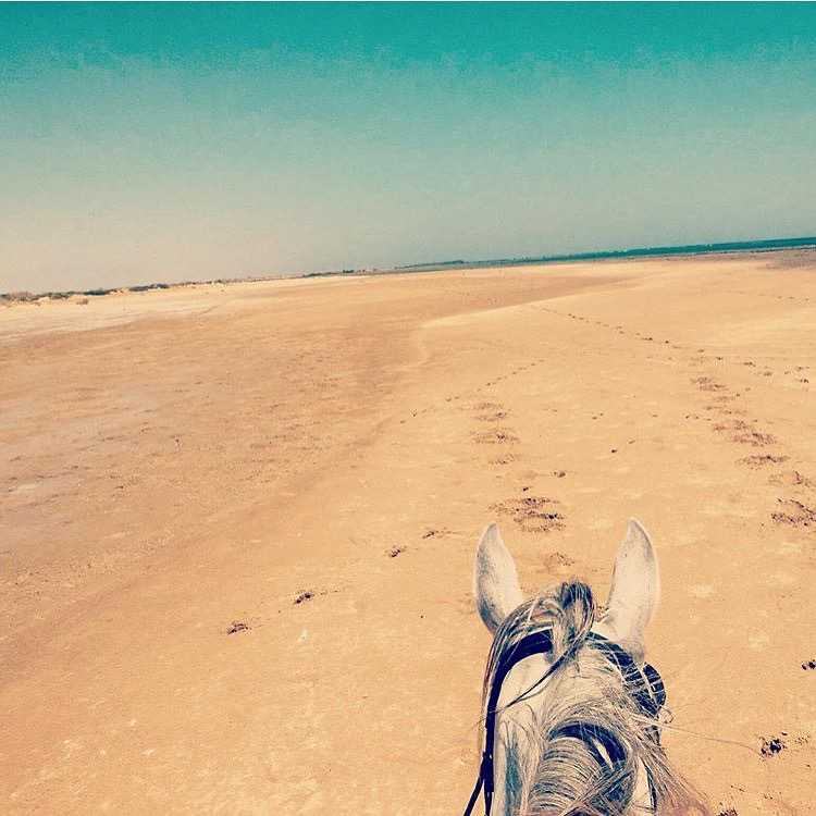 One of the first dark, rainy days in the Seattle area so I thought a dose of warm beach might be in order. Thanks to 🔷 @sharm_equestrian 🔷 riding holidays on the edge of the Sinai Desert and the Ted Sea. www.sharmequestrian.com  .......... Tag your photo #lifebetweentheears for a chance to be featured. Ride On! ^^ ......... #betweentheears #equestriantravel #equestrianphotography #equestrianadventure #redsea #sharmelsheikh #sinaidessert #egypt #thankyou #sharmequestrian