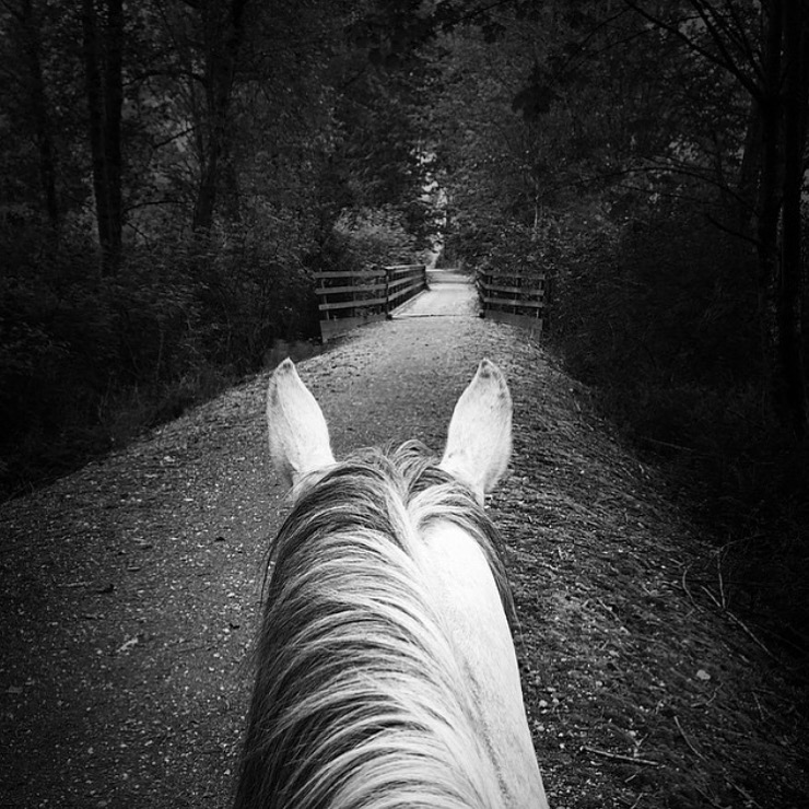 Thank you 🔷 @alonamillison 🔷 for this spectacular black and white, which has truly always been my favorite. ....... Tag your photo #lifebetweentheears for a chance to be featured. Ride On! ^^ ........ #betweentheears #equestrianlife #equestriantravel #equestrianphotography #blackandwhitephotography #upperleft #pacificnorthwest #thankyou #alonamillison