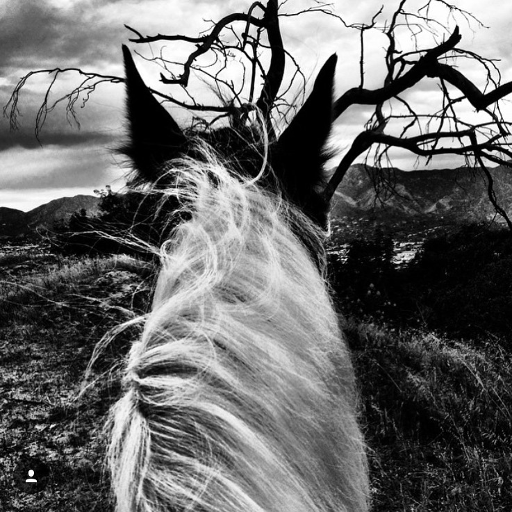 While we're on the subject of black/white.... I've been saving this one by my insta-friend and loyal supporter 🔷 @ericgabrielxx 🔷 aboard Romeo, for some time now. Waiting for spooky October. ...... Tag your photo #lifebetweentheears for a chance to be featured. Ride On! ^^ ...... #betweentheears #equestrianlife #equestriantravel #equinephotography #boo #spooky #backandwhite #losangeles #thankyou #ericgabriel