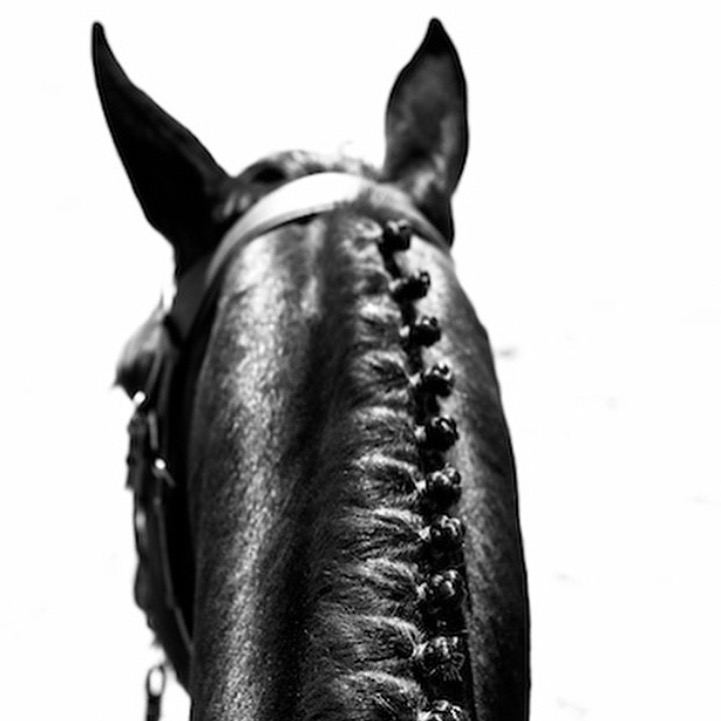 I'm on a black/white roll tonight. I also had this beauty tucked away for ages. Thanks to pro photographer 🔷 @ardenwardupton 🔷 for sharing this one aboard her own Dutch Warmblood stallion at WEF. She sells her fabulous limited edition fine art prints on her site at www.  ardenwardupton.com/equus  ...... Tag your photo #lifebetweentheears for a chance to be featured. Ride In! ^^ ...... #betweentheears #equestrianlife #equinephotography #blackandwhitephotography #equuscollection #limitededition #wef #kwpn #stallion #dutchwarmblood #thankyou #ardenwarduptonphotography