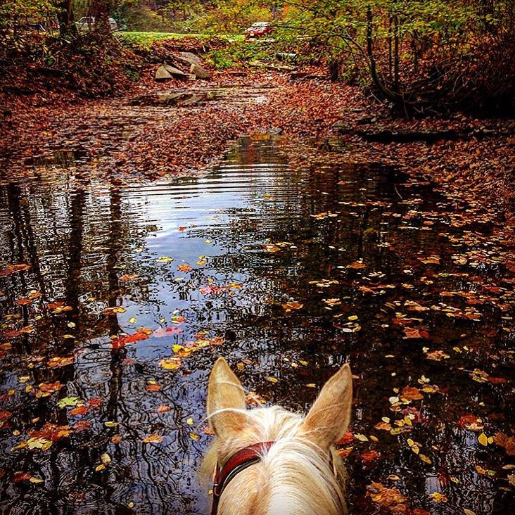 Today I learned there is more than one Nashville, and that it's got a beautiful place to ride called Brown County State Park. Thanks to 🔷 @waynesparks66 🔷 for sharing this perfect bit of fall.  ......... Tag your photo #lifebetweentheears for a chance to be featured. Ride On! ^^ ........ #betweentheears #fallcolor #equestriantravel #equinephotography #browncountystatepark #nashville #indiana #thankyouwayne