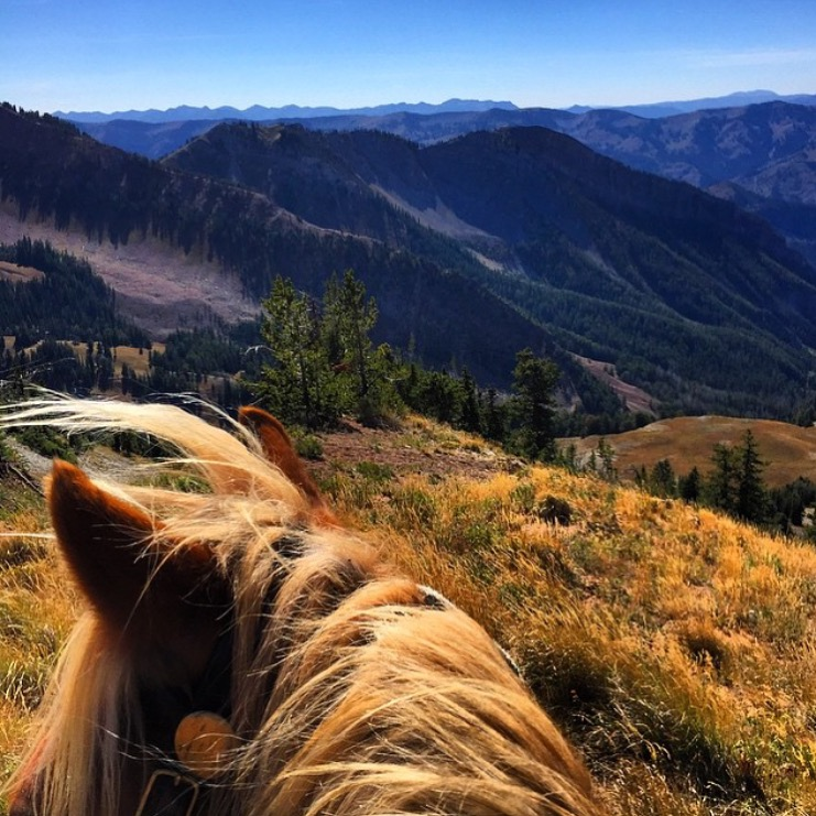 Continuing with our feature today of 🔷 @alixcritt / @sleepingindianoutfitters 🔷 backcountry ride guides in the pristine Gros Ventre Wilderness about her haflinger pony, Tuff. Not s soul in sight.   ........   Tag your photo #lifebetweentheears for a chance to be featured. Ride On! ^^   .......   #betweentheears #equestriantravel #equestrianadventure #equinephotography #backcountry #grosventre #wilderness #wyoming #thankyou #sleepingindianoutfitters #alixcrittenden