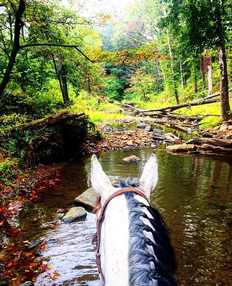 There's a reason why Virginia is considered some of the finest horse country in the US. Thanks to 🔷 @merrrina 🔷 for this storybook view at Clinton Farm, which connects to the Upperville Horse & Colt show, the oldest horse show in the country next to The Devon Horse Show. ........ Tag your photo #lifebetweentheears for a chance to be featured. Ride On! ^^ ........ #equestrianlife #equestrianstyle #equinephotography #horsecountry #uppervillehorseshow #virginia #thankyou #marinaroyston