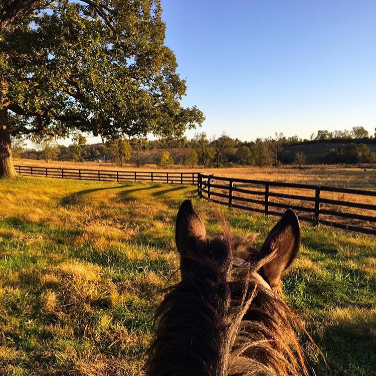 The parade of fall photos continues. Thank you 🔷 @kristin.posner 🔷 of Kristin Posner Dressage for sharing her autumnal view near Lexington.  ......... Tag your photo #lifebetweentheears for a chance to be featured. Ride On! ^^ ........ #equestrianstyle #equestriantravel #equinephotography #fallcolor #lexington #kentucky #thankyou #kristinposnerdressage