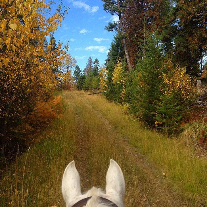 The FallFest continues! Thanks to my insta-friend 🔷 @annalouisestene 🔷 and her trusty steed in the Big Sky country. Check out her gallery for spectacular Montana views. ...... Tag your photo #lifebetweentheears for a chance to be featured. Ride On! ^^ ........ #fallcolor #fallfest #bigskycountry #montana #equestrianlife #equestriantravel #equinephotography #equestrianadventure #thankyou #annalouisesteen