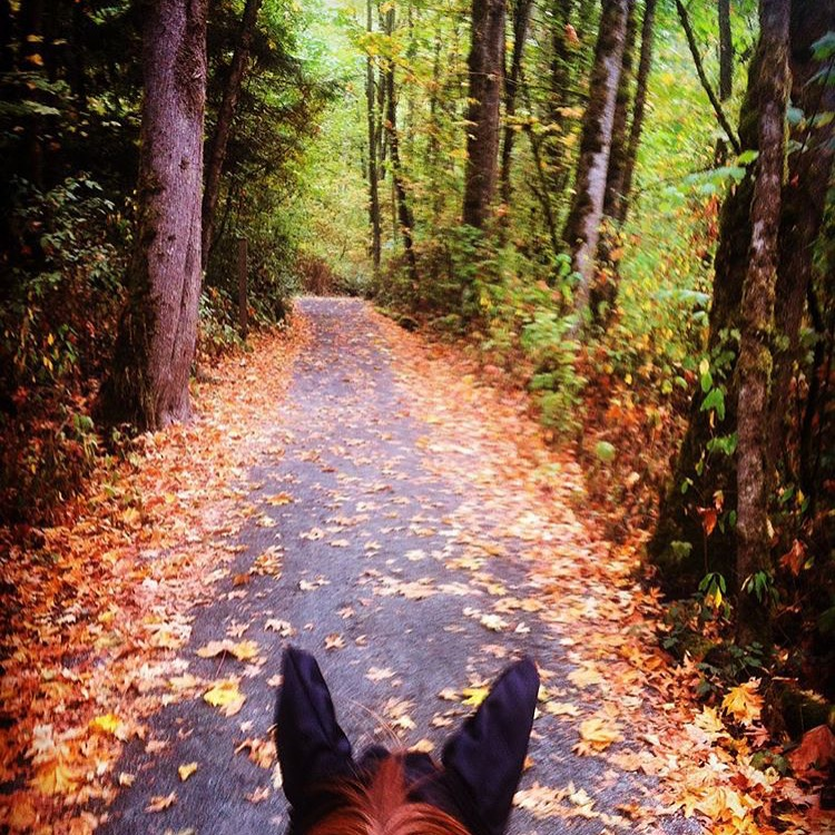 More FallFest! Thank you 🔷 @streetandsaddledotcom 🔷 Katelyn Woodburn for your sutumnal view near Vancouver, Canada. ....... Tag your photo #lifebetweentheears for a chance to be featured. Ride On! ^^ ....... #equestrianstyle #equestrianlife #equestriantravel #equinephotography #fallfest #fallcolor #vancouver #canada @thankyou #streetandsaddle #katelynWoodburn