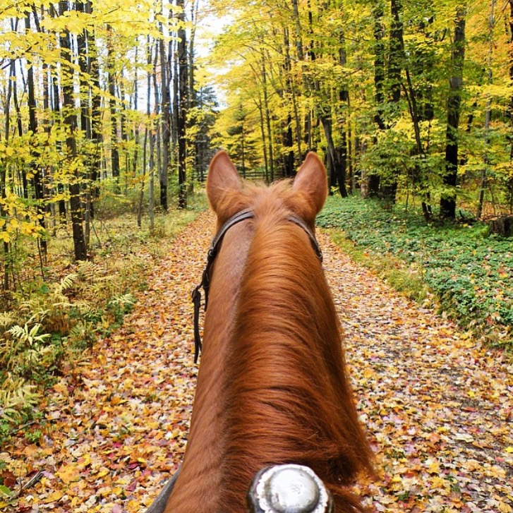 Quintessentail Fall-Fest in Vermont, thanks to 🔷 @wlc.horses.plus 🔷 Wendy Cardorette. 🍂🍁 ✨ ..... Tag your photo #lifebetweentheears for a chance to be featured. Ride on! ^^ ....... #fallfest #fallcolor #vermont #equestrianstyle #equestriantravel #equinephotography #thankyou #wendycordette