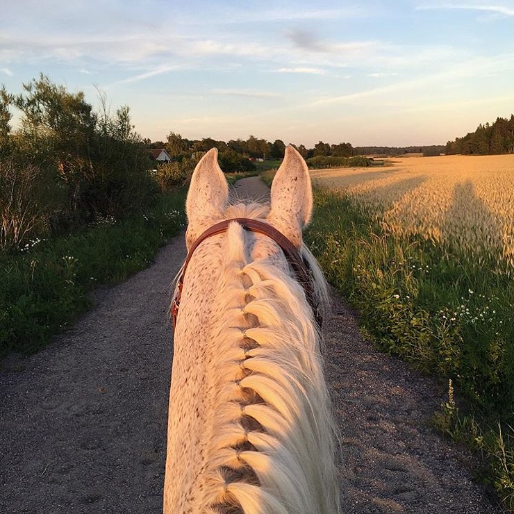 This one is dedicated to my insta-friend 🔷 @enduranceella 🔷 Swedish Endurance Young Rider, for the loss of her dear Silver, pictured here, whose lovely ears I have featured several times. Til you meet again @enduranceella .......   💔💐